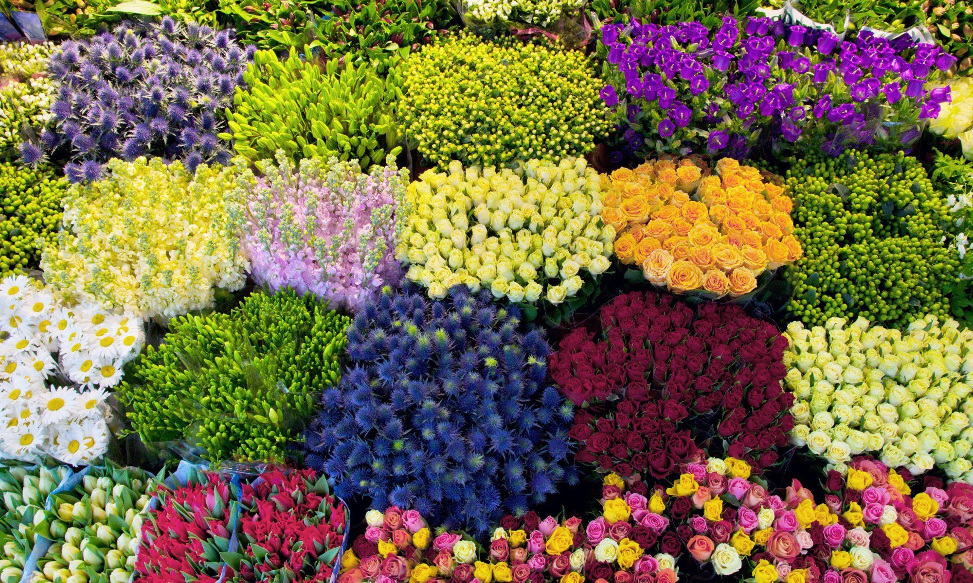 Blumen-Lorch